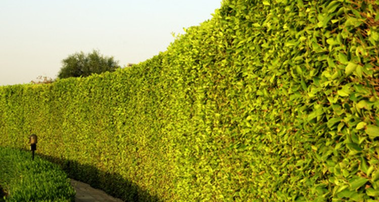 Tall growing trees creat natural fences and boundaries.