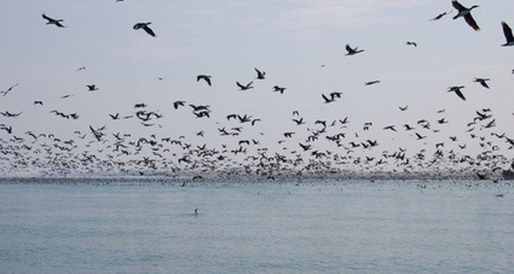 Os pássaros podem destruir as colheitas ou perturbar os jantares ao ar fresco