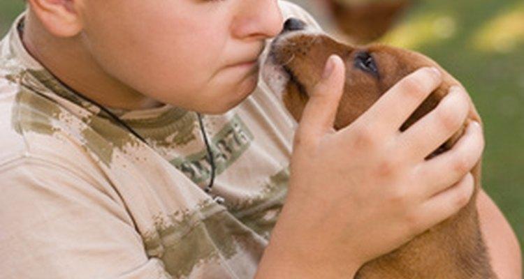 Tu hijo puede pasarle la faringitis estreptocócica a tu cachorro.