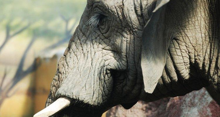 Fantasias de elefante devem focar na tromba do animal e em suas grandes orelhas