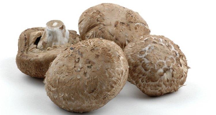 El hongo Saprophytic cumple la importante tarea de liberar los nutrientes de las materias muerta.