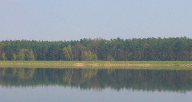 La Elodea puede encontrarse en todo Estados Unidos, en cuerpos de agua dulce.