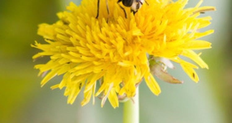Las abejas masculinas son las que se llaman zánganos.