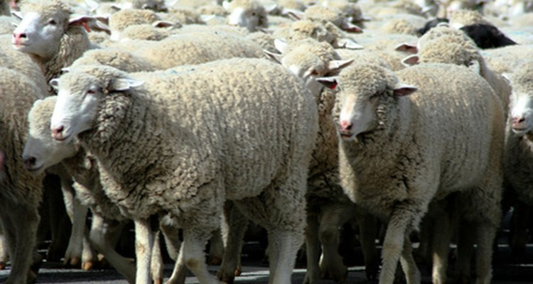 Wool can be composted into beneficial soil.