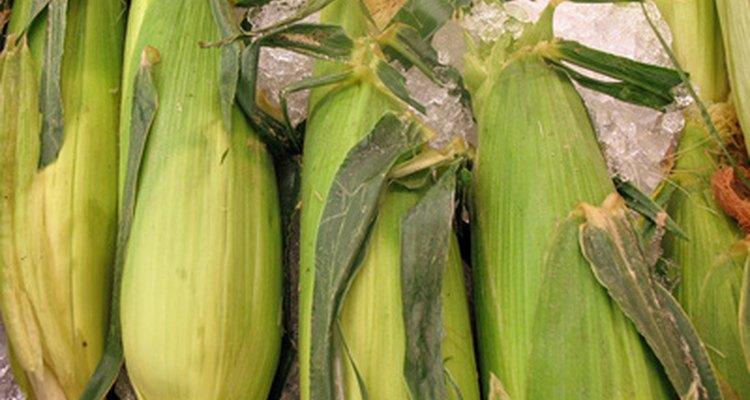 É fácil cozinhar milho doce fresco