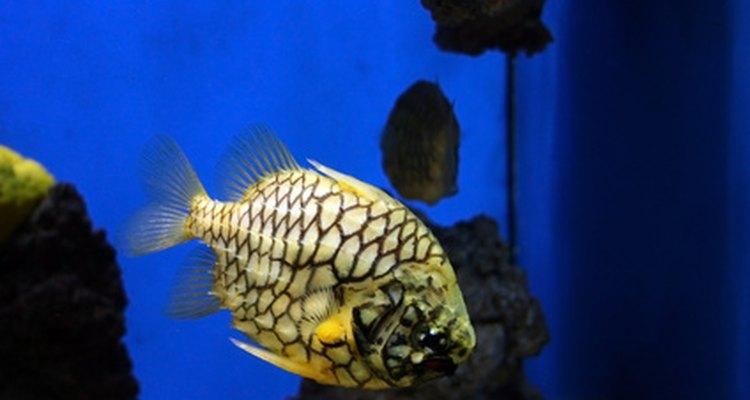 Los niveles de nitratos altos pueden matar a los peces.