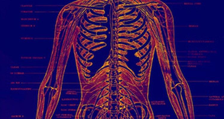 Uma obstrução peniana pode ser indicativo de uma doença subjacente ou mais grave