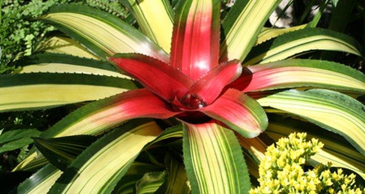 A luz do sol é essencial para a planta realizar a fotossíntese