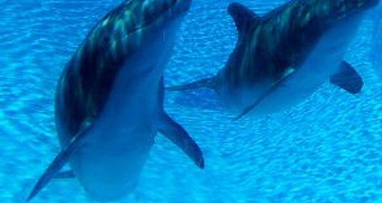 Los delfines pueden protegernos de los tiburones