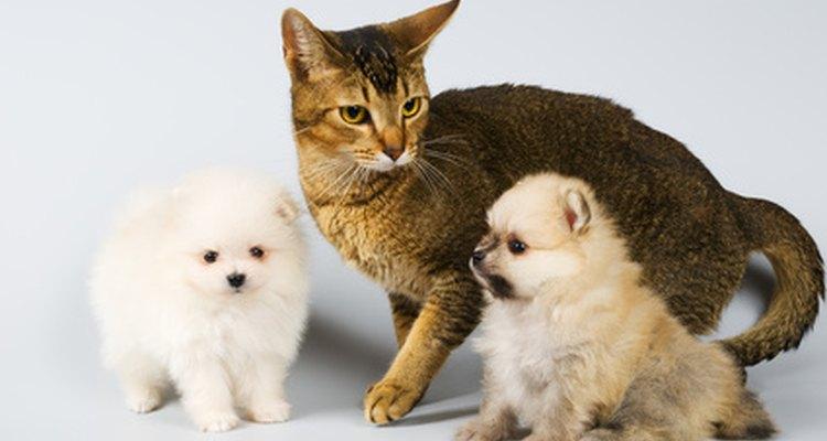 Tente remediar os animais de estimação com ervas para problemas urinários