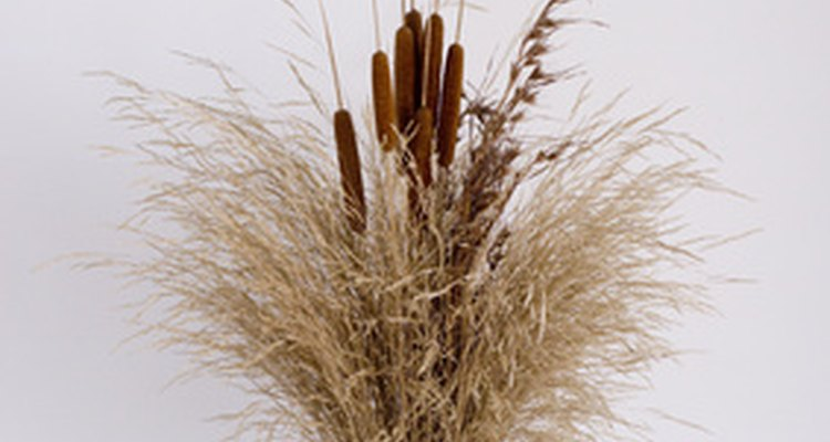 Bulrushes also keep for a long time and are therefore ideal for dried flower arrangements.