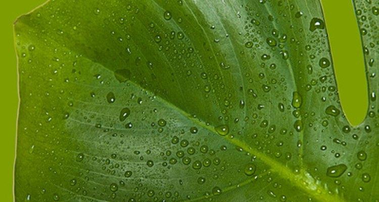 Las enzimas controlan la germinación, resistencia a enfermedades, crecimiento de la planta y la modificación celular.