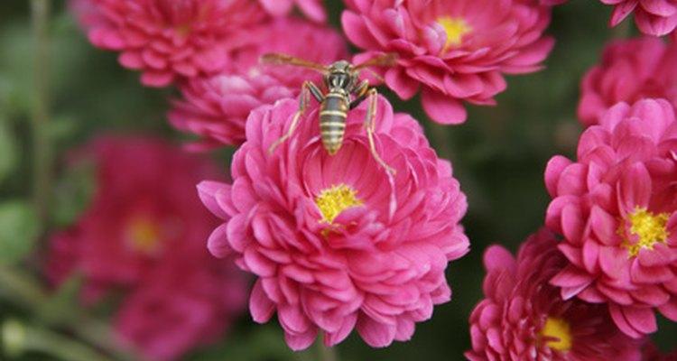 Las flores no producirán semillas sin la polinización.