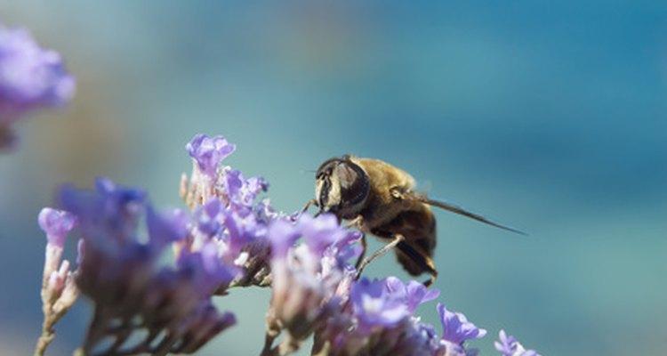 Las abejas juntan néctar y los humanos se benefician cuando polinizan y fertilizan a las plantas.