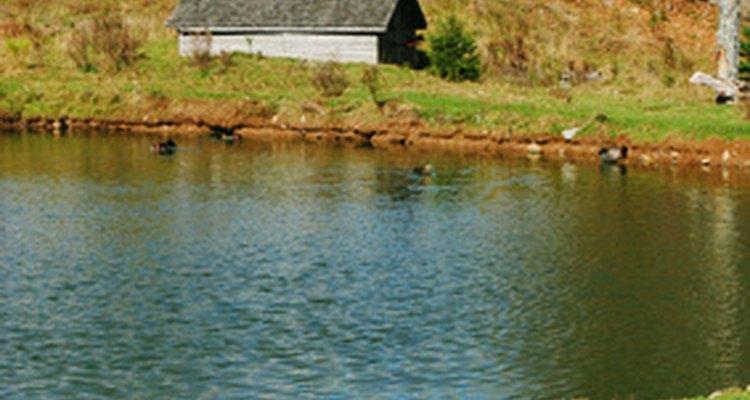 Siga um processo fácil para reparar o vazamento de uma lagoa