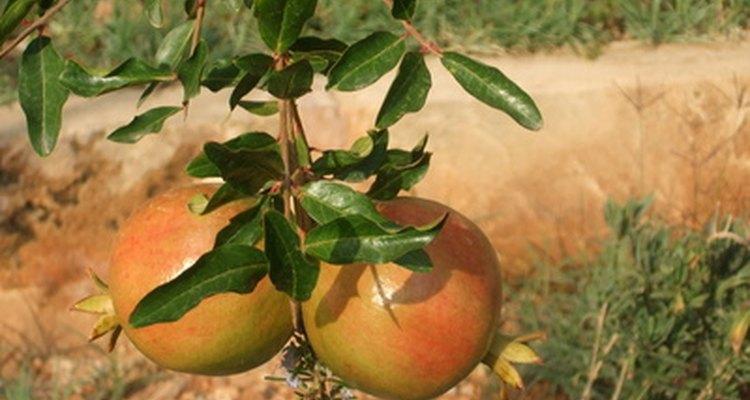El tipo y la calidad de la tierra son factores importantes para el cultivo de las plantas.