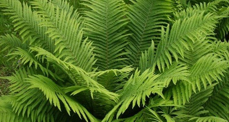 A beleza realística de plantas artificiais