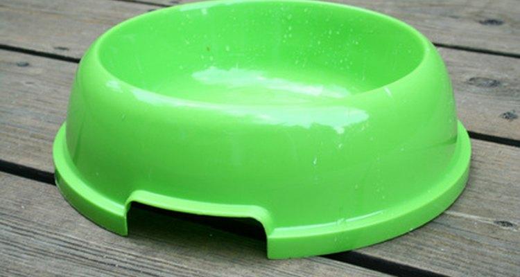 Deixe uma vasilha com água a disposição do esquilo, a medida que ele for capaz de alimentar-se sozinho