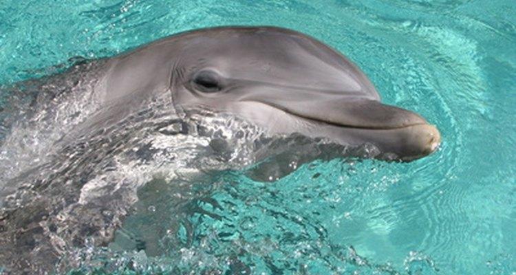Los biólogos marinos trabajan con criaturas acuáticas.