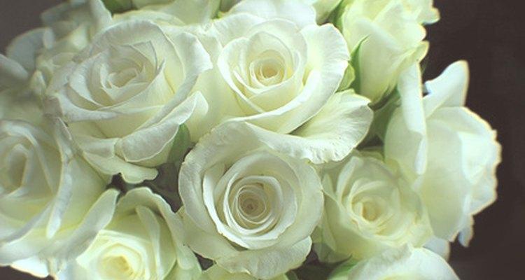 Las rosas blancas se mezclan bien con cualquier combinación de colores.