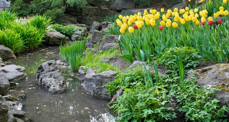 Una de las características del agua es que ayuda a crear un ambiente arbolado.