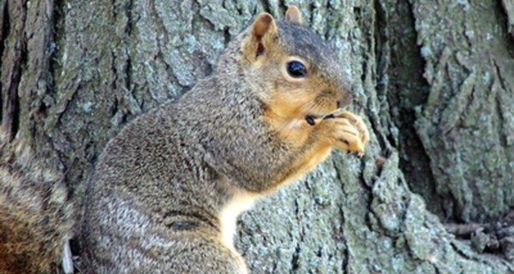 Squirrels have few gender-identifying traits.