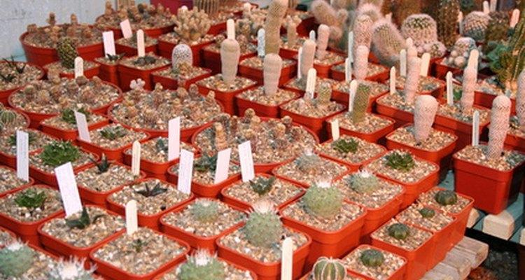 Los viveros cultivan las plantas en macetas.