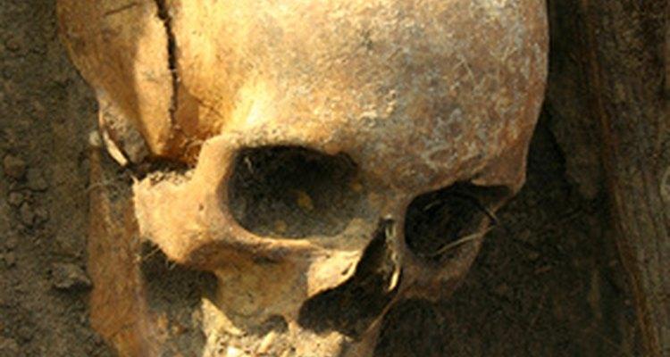 Los silbatos aztecas de la muerte deben verse como calaveras humanas.