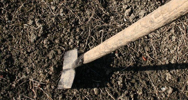 Prepara bien el suelo con abono.