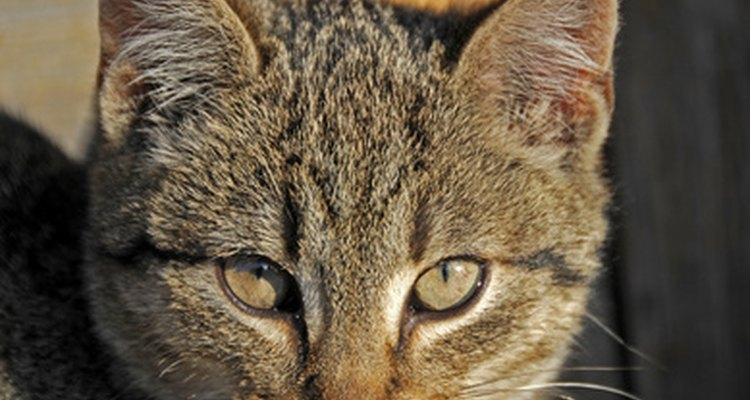 Keep your cat healthy and flea free.