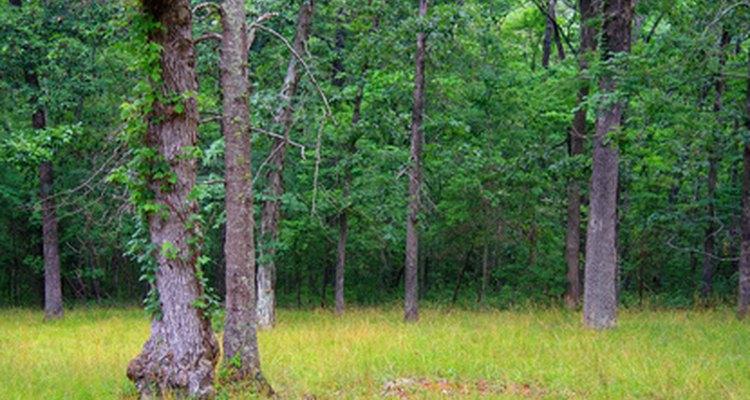 Bosque en Georgia.