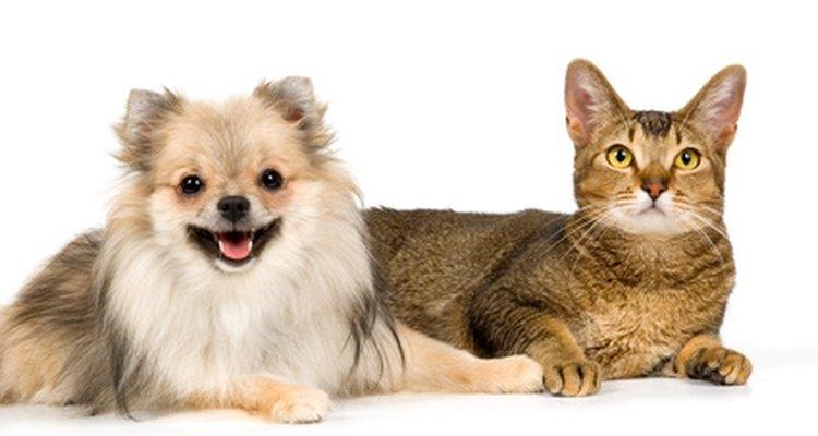 Las mascotas caseras pueden ser sensibles a los repelentes ultrasónicos