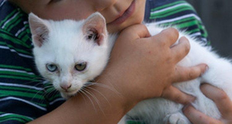 Acariciar a un gato disminuye la presión no sólo del humano, sino también del animal.