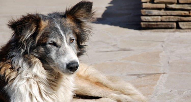 Um cão doente pode ingerir papel