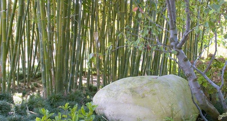 Bamboo stands create unique backdrops.