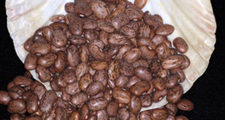 Entre los 40 y 50 días luego de la germinación, las vainas de frijol seguirán creciendo hasta producir vainas maduras.
