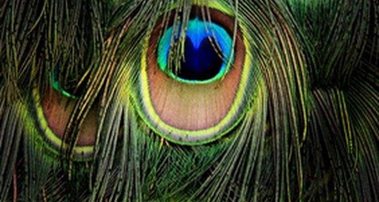 Agrega plumas de pavo real a tu centro de mesa para darle un interés visual.