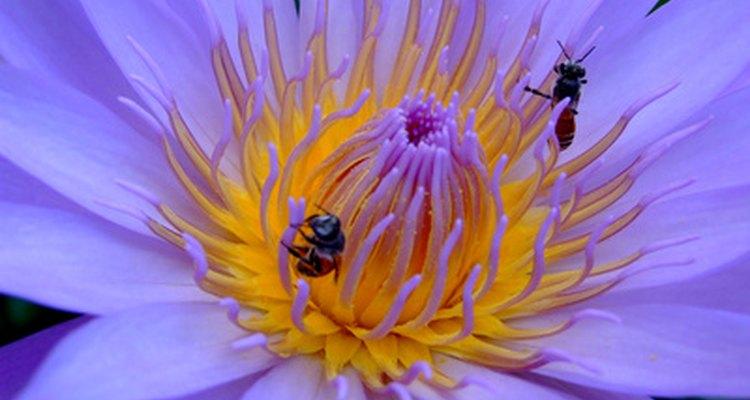 Construir uma colmeia é o primeiro passo para ter sua própria colônia de abelhas em casa