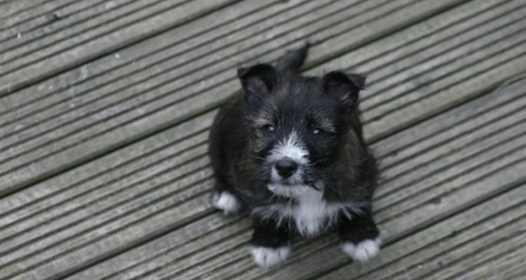 Puppies under four weeks old should never be given praziquantel