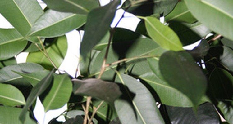 Inspecione as plantas para evitar levar para casa infestações indesejadas