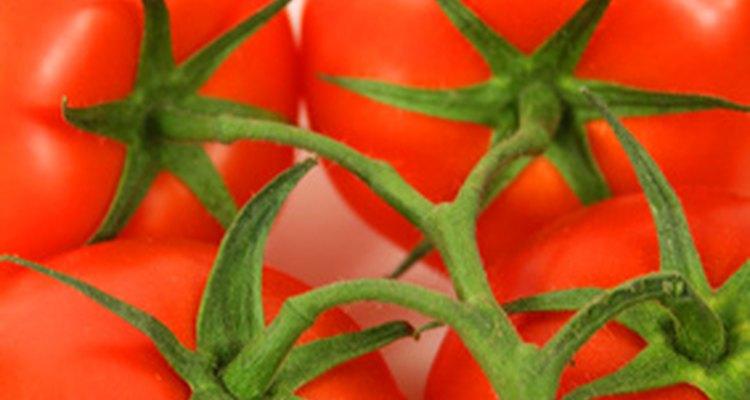 Los tomates perfectos requieren una cantidad de agua adecuada.