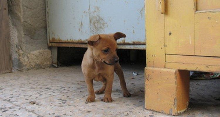 La desparasitación regular mantiene al cachorro sano y feliz.