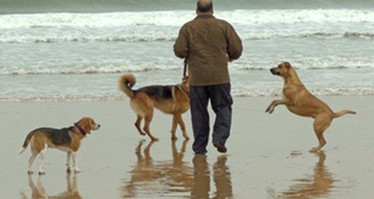 Algunos perros tienen realmente problemas con la producción de lágrimas suficientes, lo que hará que tengan los ojos muy secos.