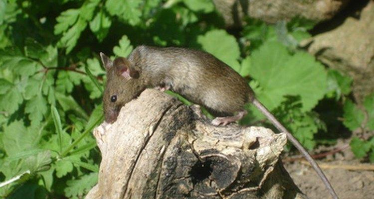 O repelente orgânico animal é um produto natural para uso em áreas externas