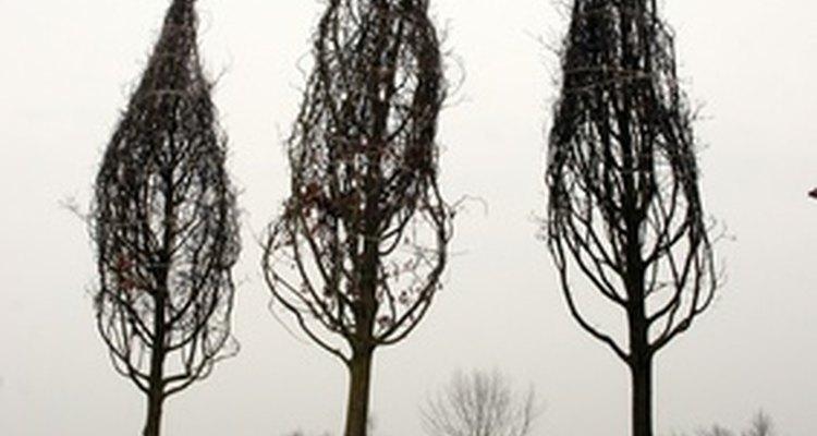Los viveros de campo crecen árboles y arbustos.