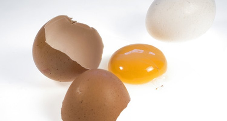 Brown or white, an egg is one of the highest quality proteins.