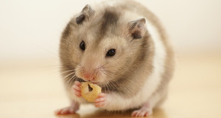 Hamsters are darling little pets