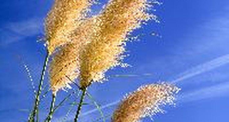 Cómo afecta la luz al crecimiento de las plantas.