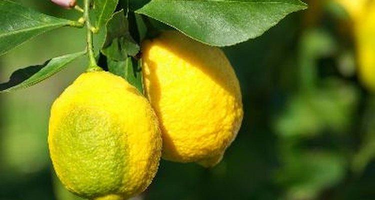 Retira los residuos del limonero bajo la planta que pueden estar albergando las plagas.
