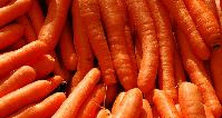Você pode cultivar cenouras hidropônicas em qualquer época do ano, não importando como o tempo está